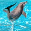 Dolphin plays — Stock Photo