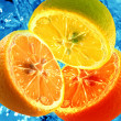 Fresh citrus background — Stockfoto
