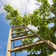Garden ladder — Stock Photo