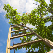 Garden ladder - Stock Photo