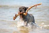 積極的な犬 — ストック写真