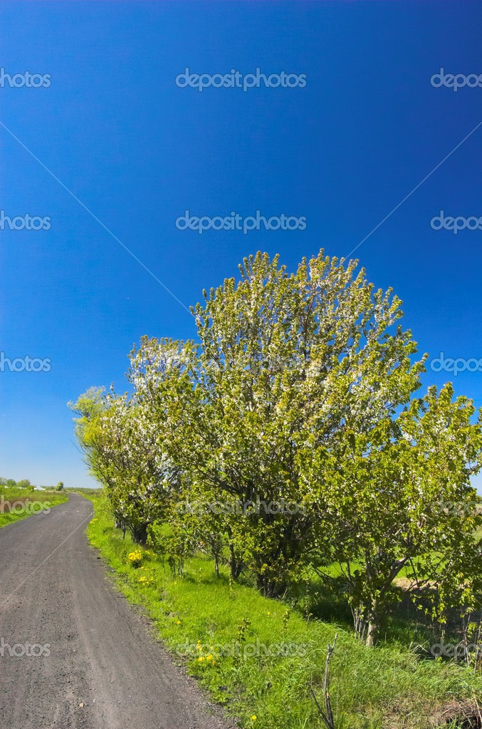 Picture of spring scenery. — Stock Photo #3481445