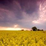 Spring landscape — Stock Photo #3490032