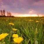 Spring landscape — Stock Photo #3490039