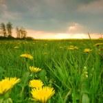 Spring landscape — Stock Photo #3490041