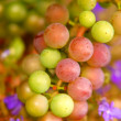 Grapes background - Stock Photo