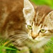 Kitten in the grass - Lizenzfreies Foto