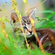 Kitten in the grass - Stock Photo