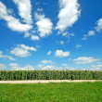 Summer landscape — Stock Photo #3494720