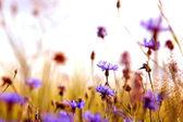 Daisies' meadow — Stock Photo