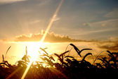 Sunset field scenery — Stock Photo