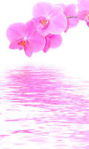 Orchid background — Stockfoto