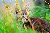 Kitten in the grass — Stock Photo