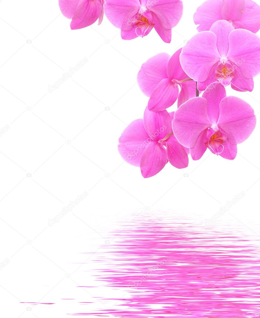 Орхидеи видео
