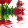 Tulips background - Stock Photo