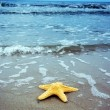 starfish — Stock Photo #3500657