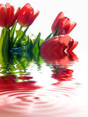 Tulipány pozadí — Stock fotografie