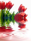 тюльпаны фон — Стоковое фото