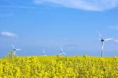 Wind turbines. — Stock Photo