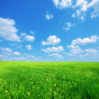 Sunny spring landscape — Stock Photo #3510442