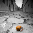 Snail crossing a road - Stock Photo