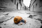 Bir yol geçiş salyangoz — Stok fotoğraf