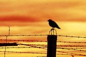 刑務所の塀の上に座って鳥 — ストック写真