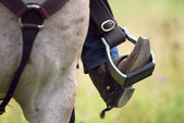 Western cowboy's boot, spur, & horse — Stock Photo