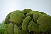 Trees in Park — Stock Photo