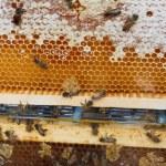 蜂の巣 — ストック写真 #3256455