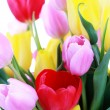 Vase of tulips — Stock Photo #2971021