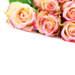 bos van rozen — Stockfoto #2973758