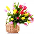 Basket full of tulips — Stock Photo #2980677