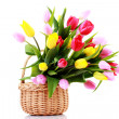 Basket full of tulips - Stock Photo