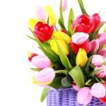 Basket full of tulips — Stock Photo