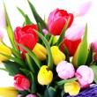 Basket full of tulips — Stock Photo