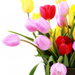 Stock Photo: Vase of tulips