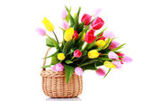 Basket full of tulips — 图库照片