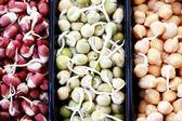 Kiełki warzywne — Zdjęcie stockowe