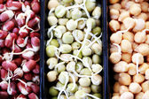 Sebze lahanası — Stok fotoğraf