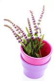 Sage flowers — Stock Photo
