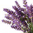 Lavender flowers — Stock Photo #3422868