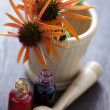 Royalty-Free Stock Photo: Echinacea alternative medicine