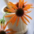 Mortar and pestle with echinacea - Stock Photo