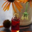 Echinacea alternative medicine - Stock Photo