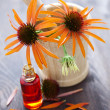 Echinacea alternative medicine — Stock Photo #3462299