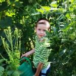 Gardener — Stock Photo #3587193
