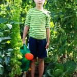 Gardener — Stock Photo #3587258