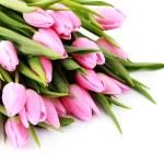 buquê de tulipas rosa adoráveis sobre fundo branco - flores — Foto Stock