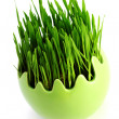 Royalty-Free Stock Photo: Green grass in egg